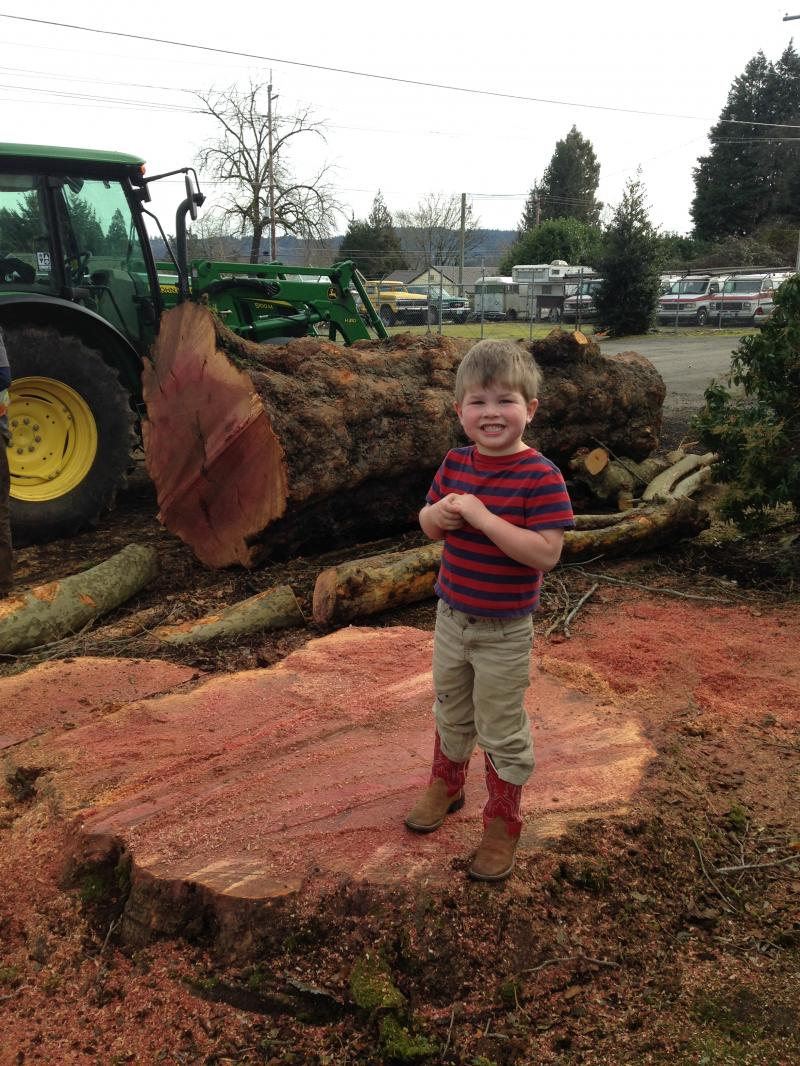 Max Burke on stump after Dad took down large Sycamore tree for Clackamas County.